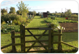 Scruton Allotments