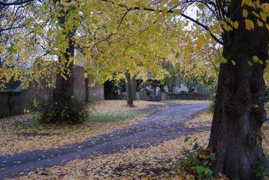 AutumnTrees540